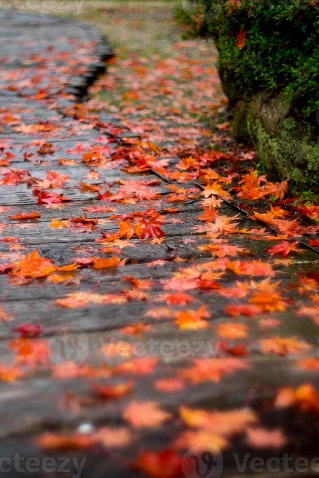 paseo de otoño foto