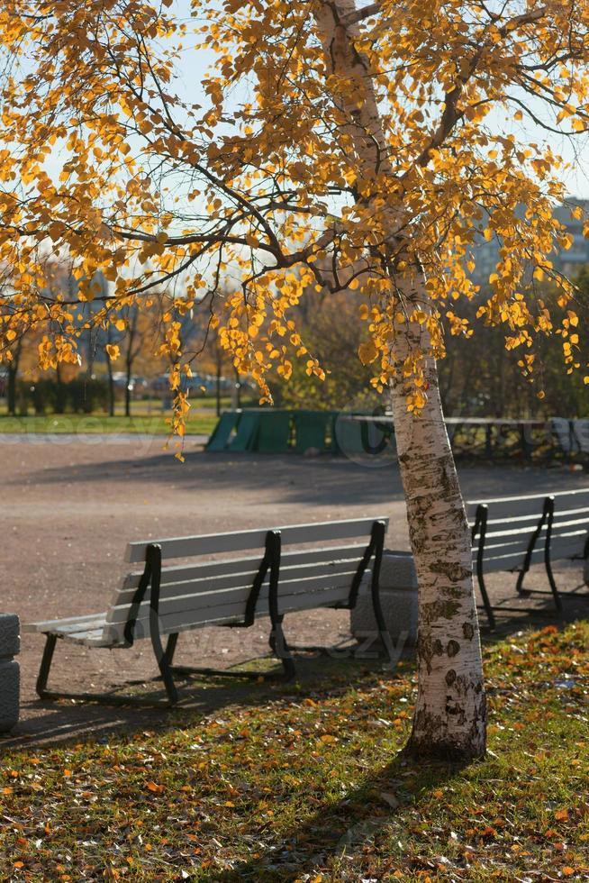 autumn park photo