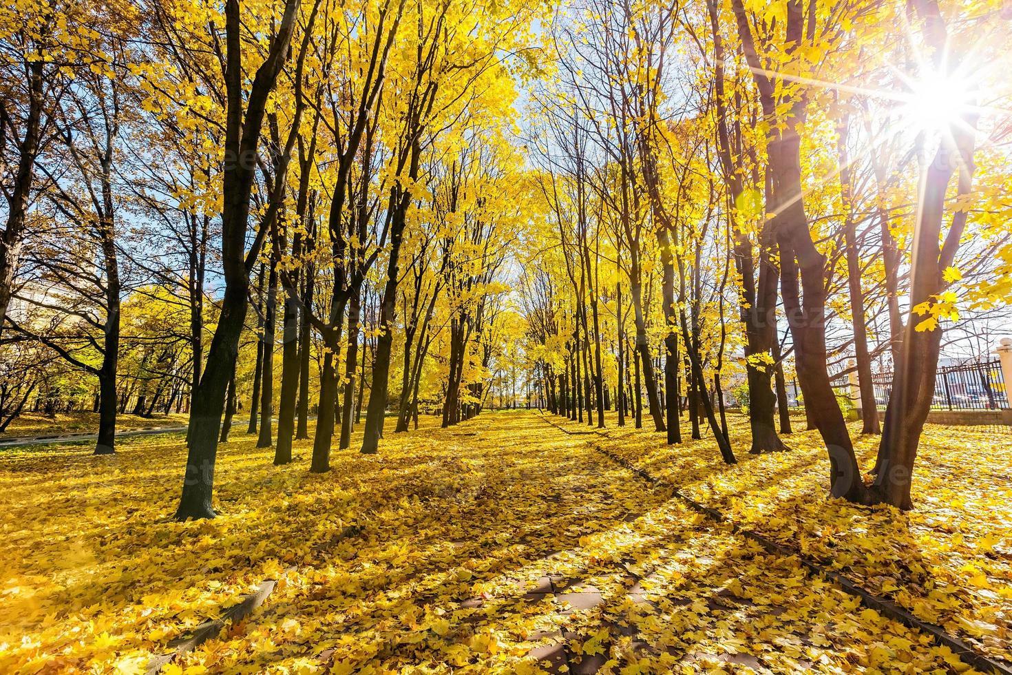 parque do outono foto