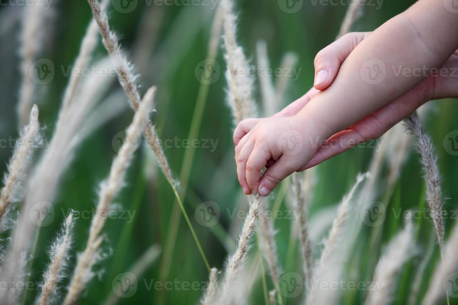 tome la mano de los niños sobre la hierba de juncos. foto