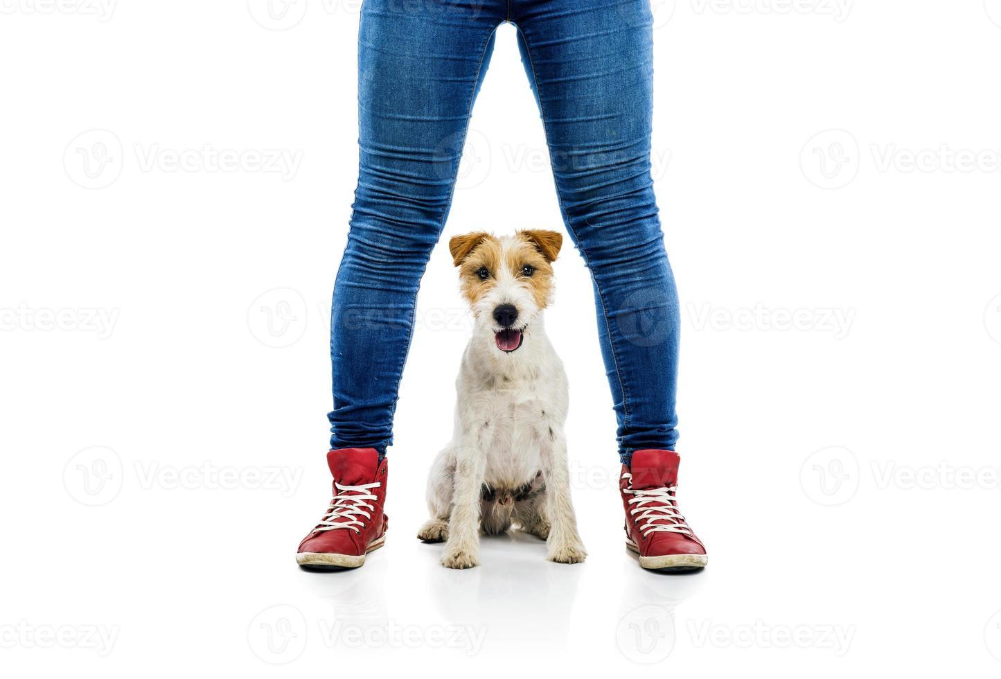 lindo perro jugando con su dueño foto