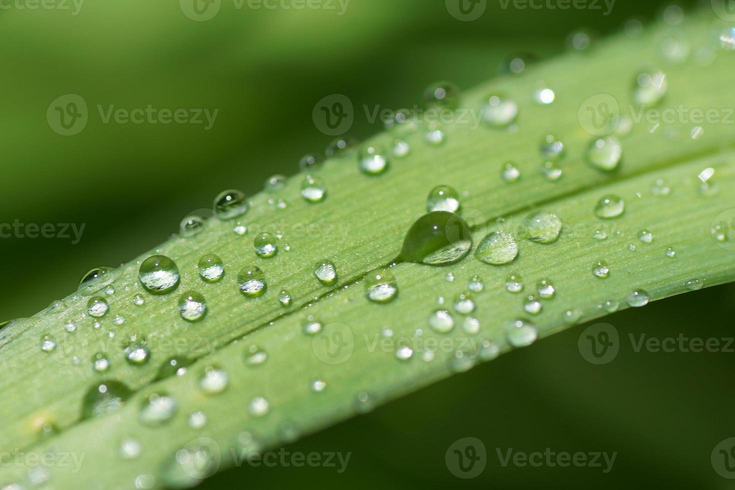 naturaleza abstracta bokeh - gotas de agua sobre la hoja después de la lluvia foto