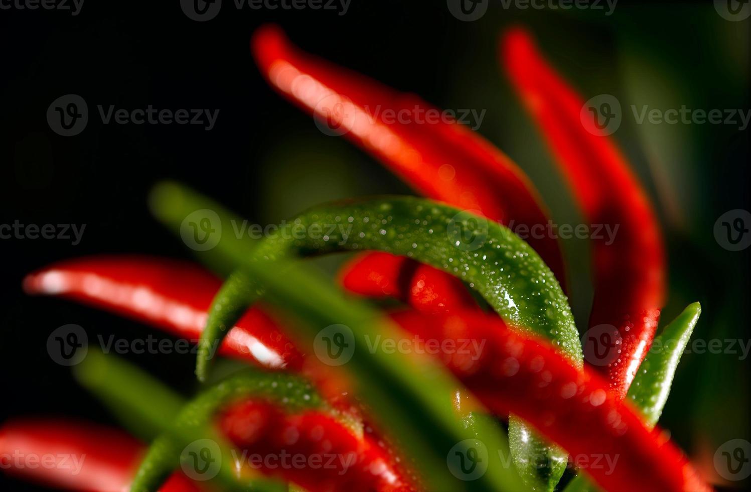composición de pimientos picantes foto