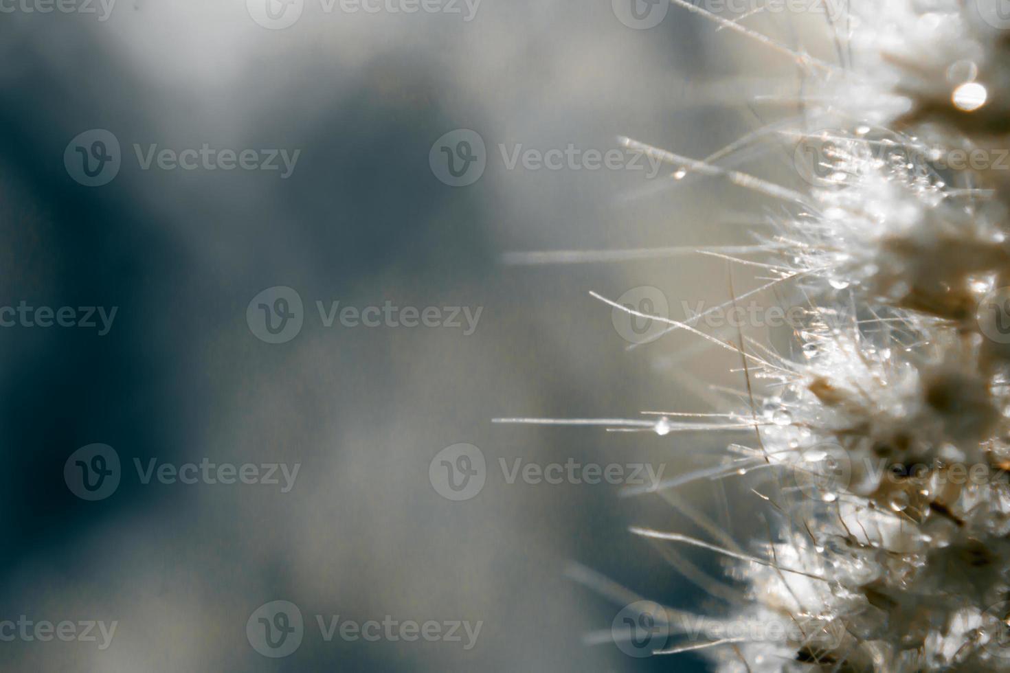 Desenfoque y enfoque suave de la flor de la hierba con gotas de agua foto