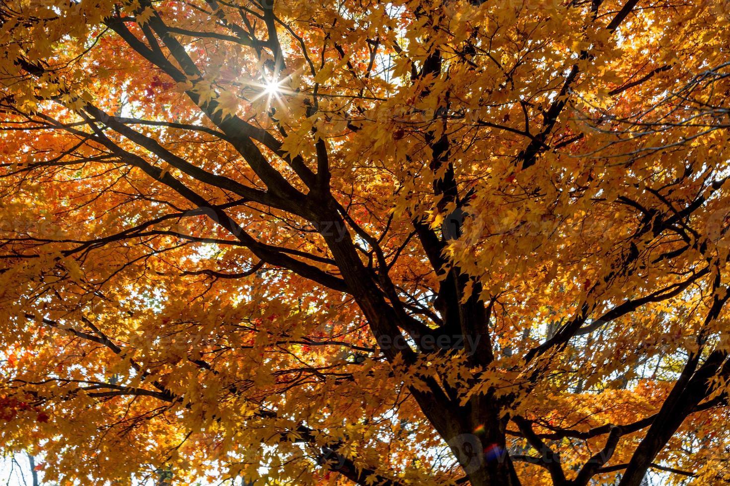 arbol de otoño foto