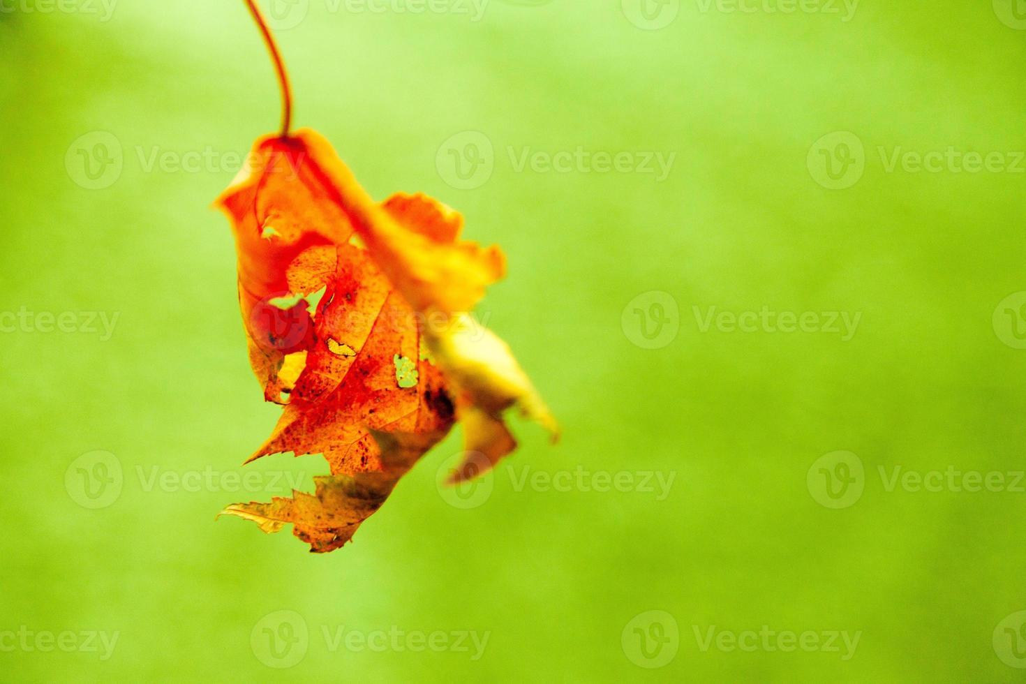 macro de otoño foto