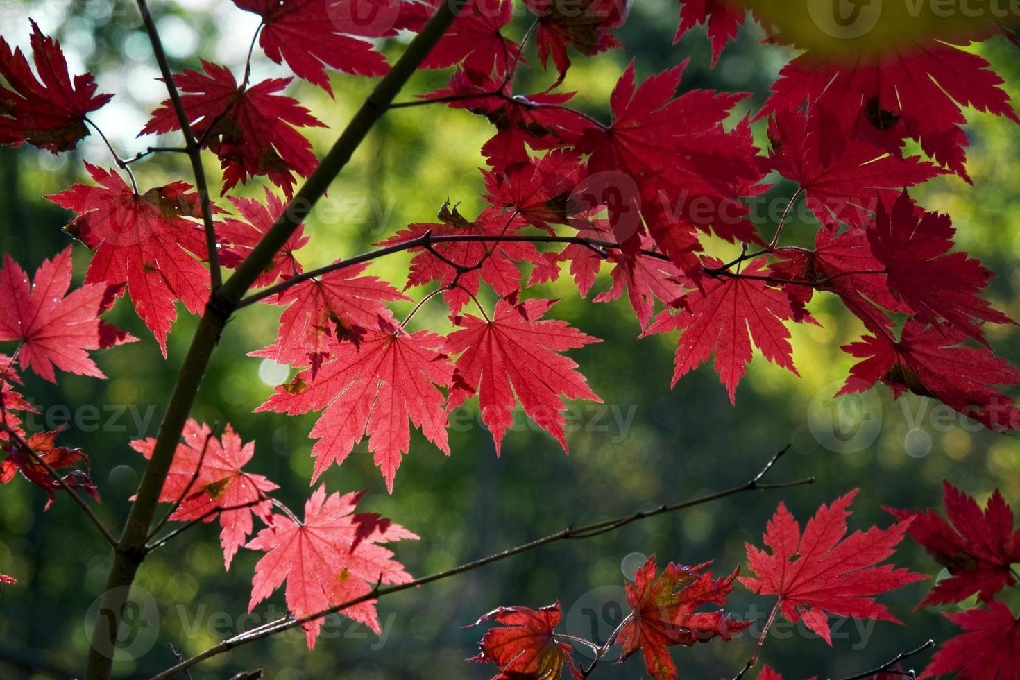color de otoño foto