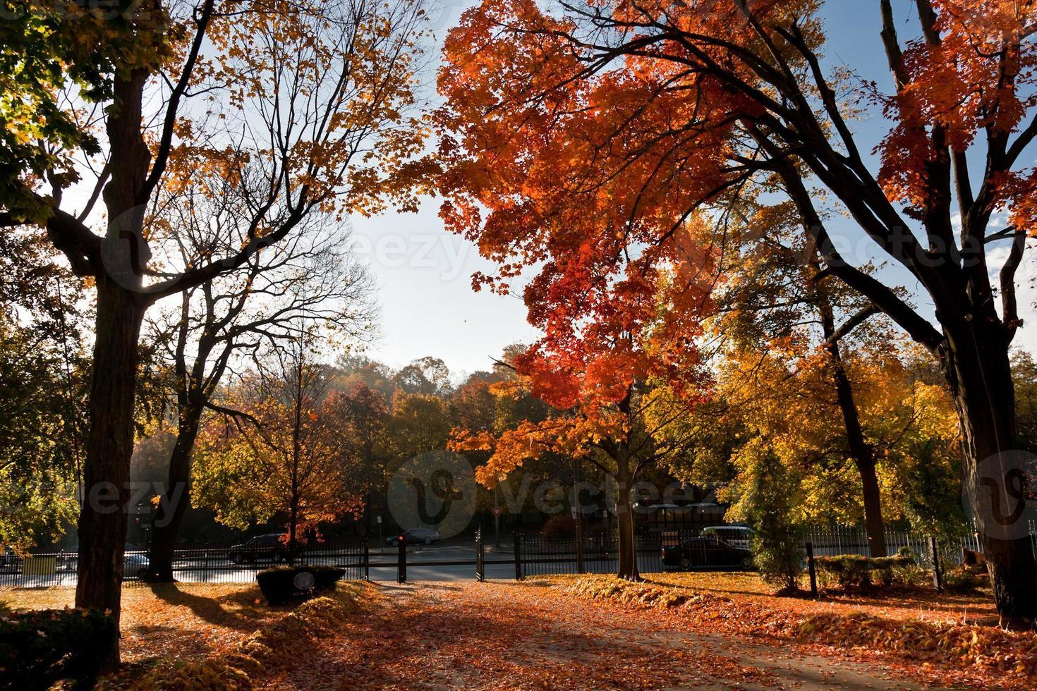 patio trasero de otoño foto