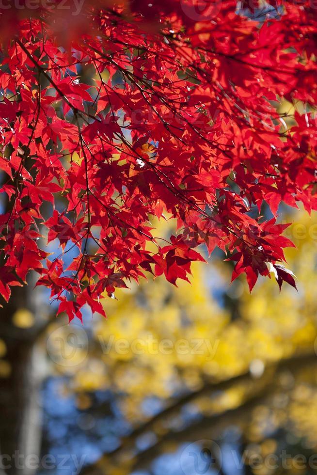 gloria de otoño foto