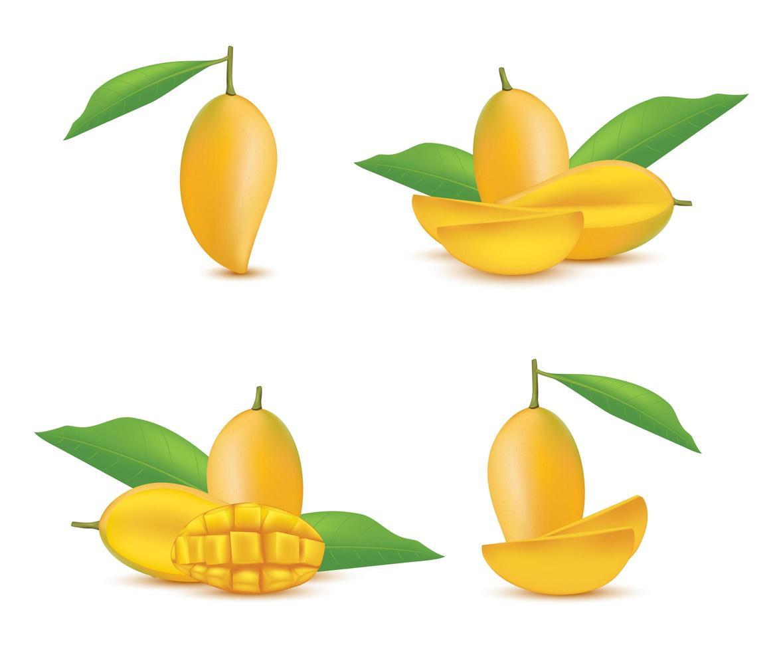 conjunto de frutas de mango realista vector