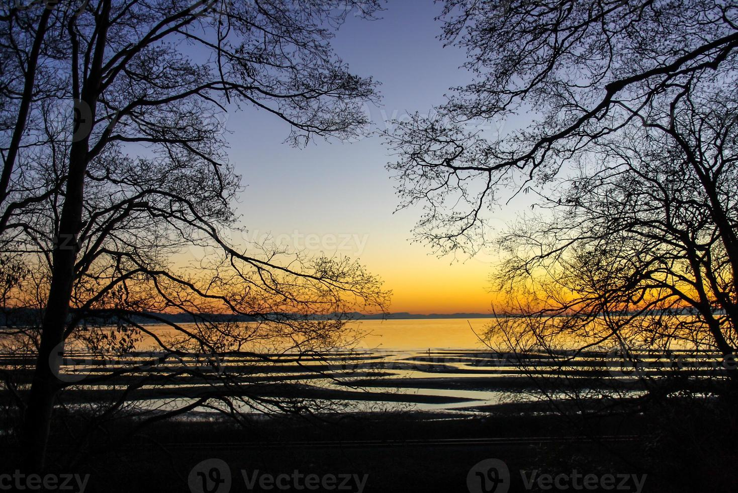 Trees framing the beach photo