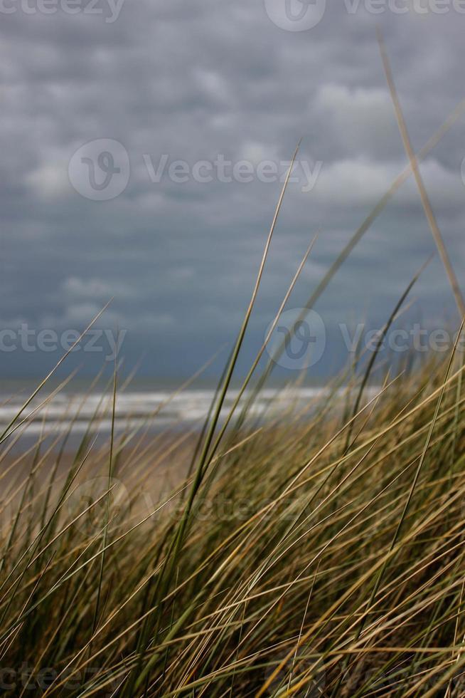 tranquilidad en la playa foto