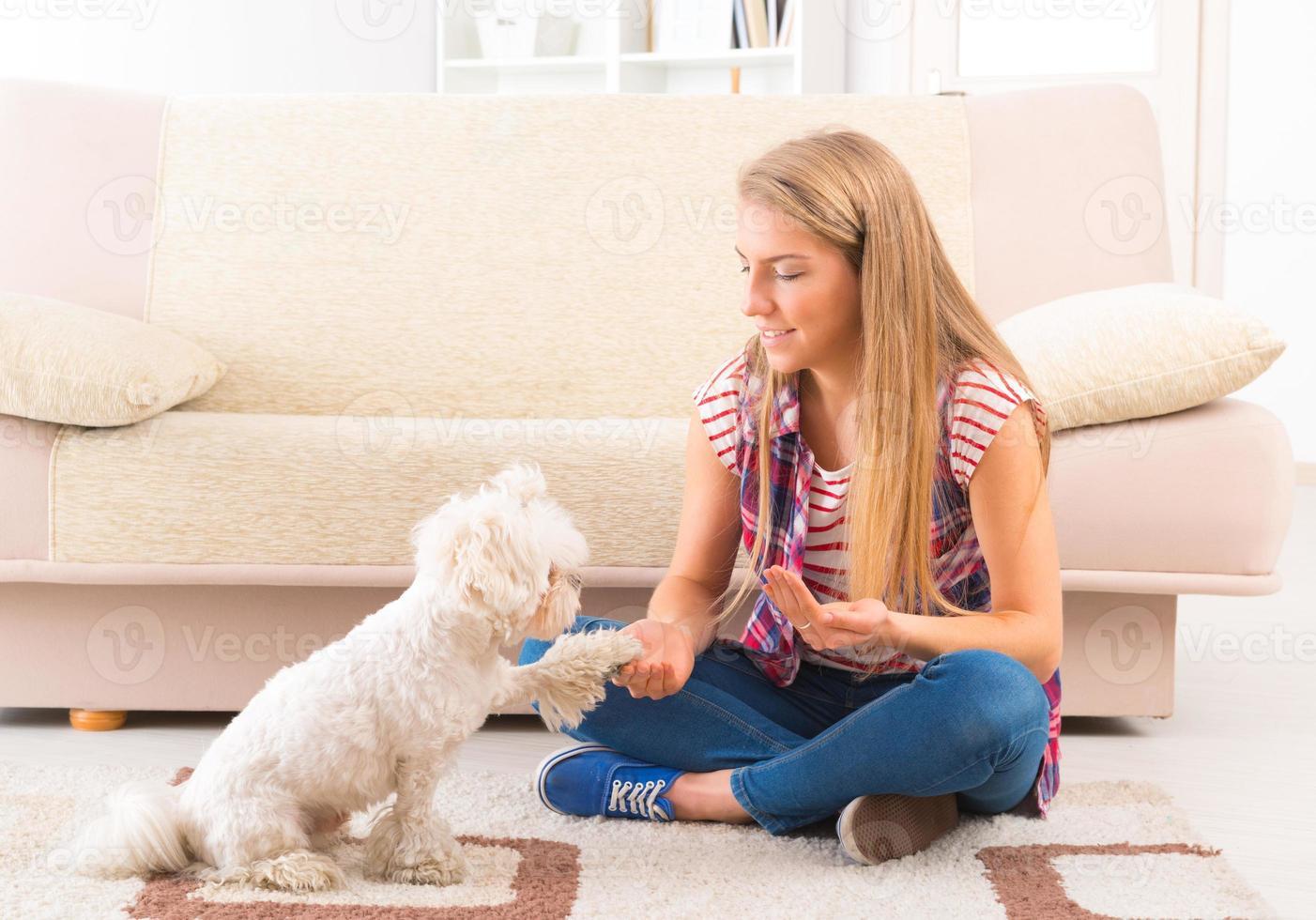 Cute Maltese dog giving a paw photo
