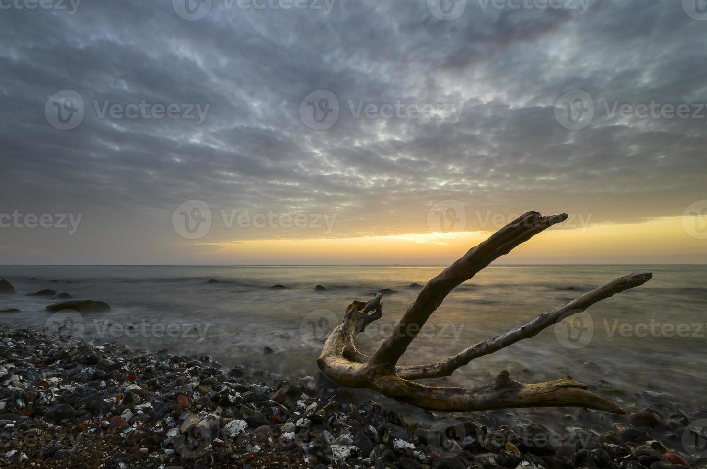 playa salvaje foto