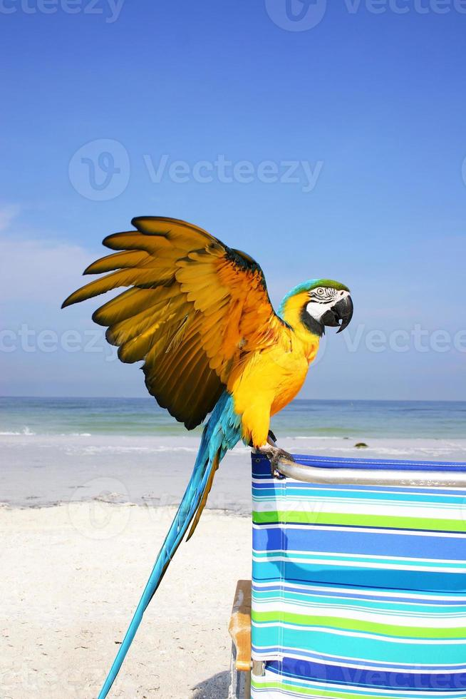 Macaw Beach photo