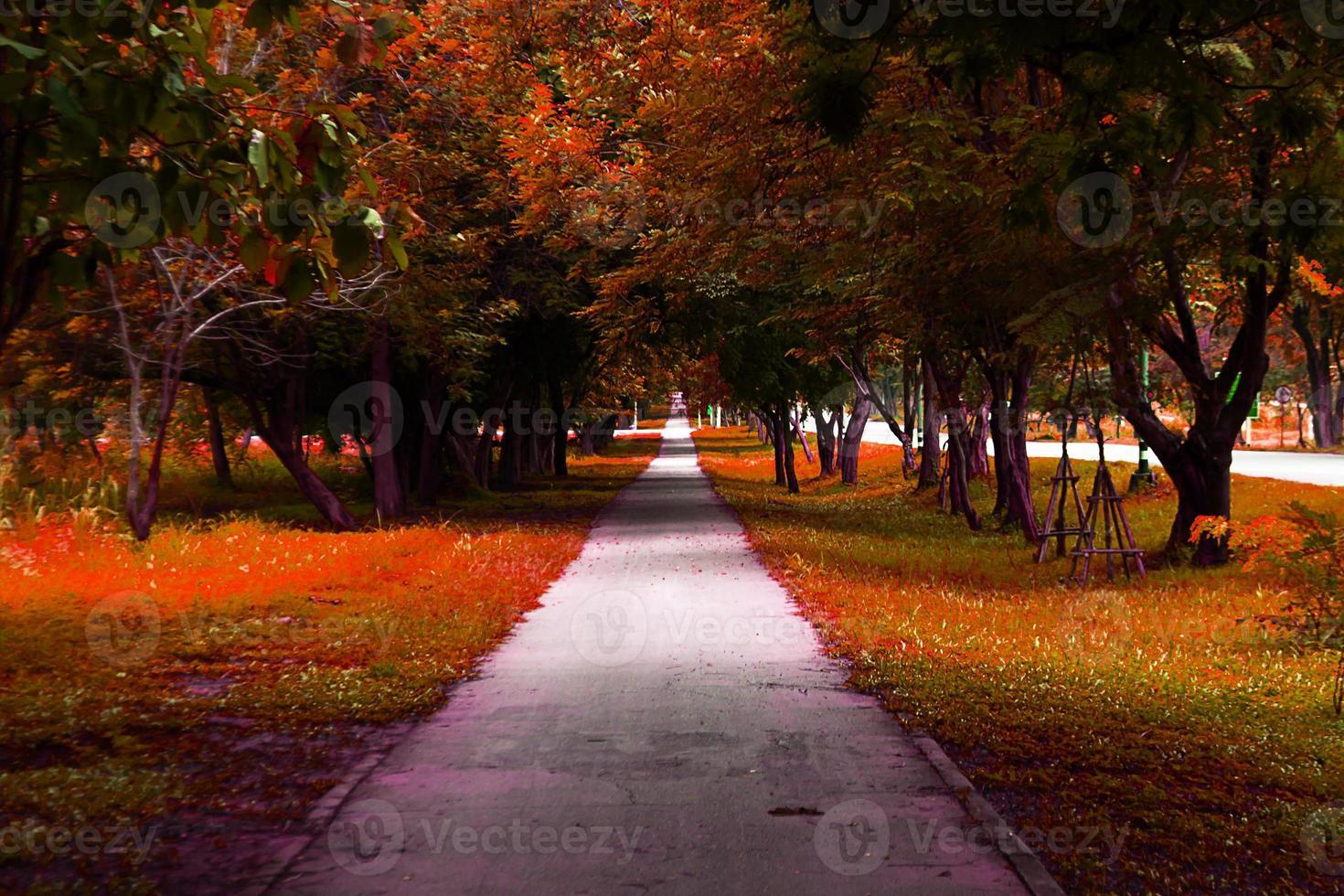 walkway park photo