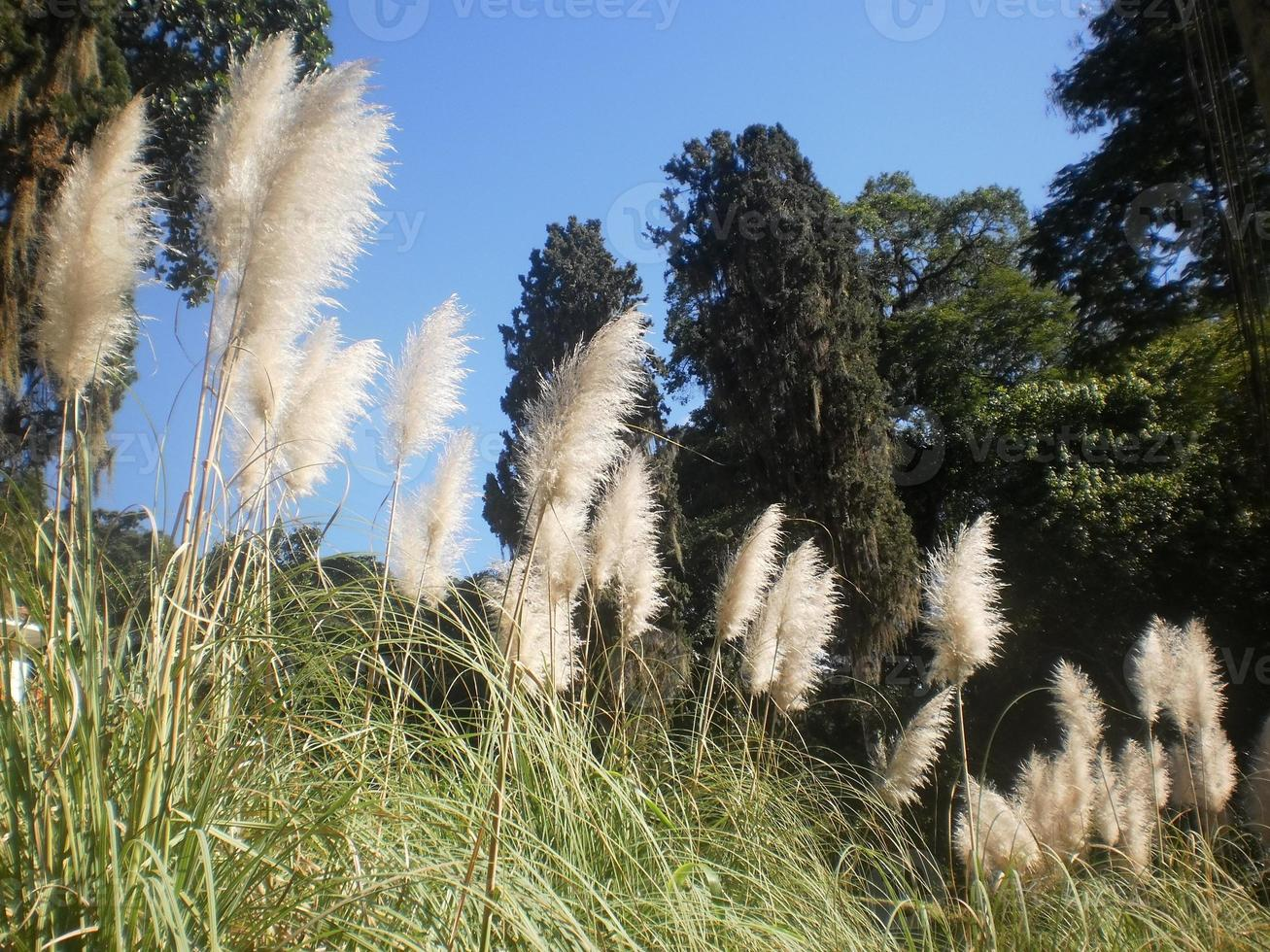 Flowers of the field of natural feathers photo