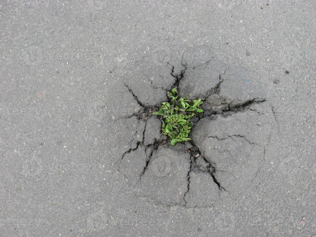 weed growing through crack in pavement photo