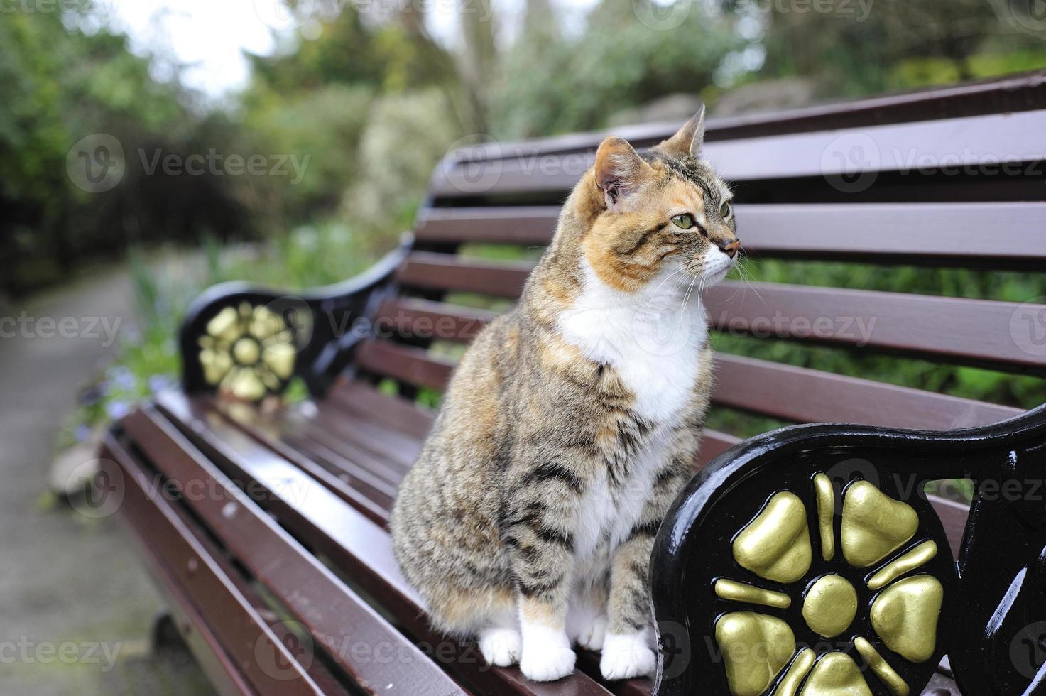 gato atigrado foto