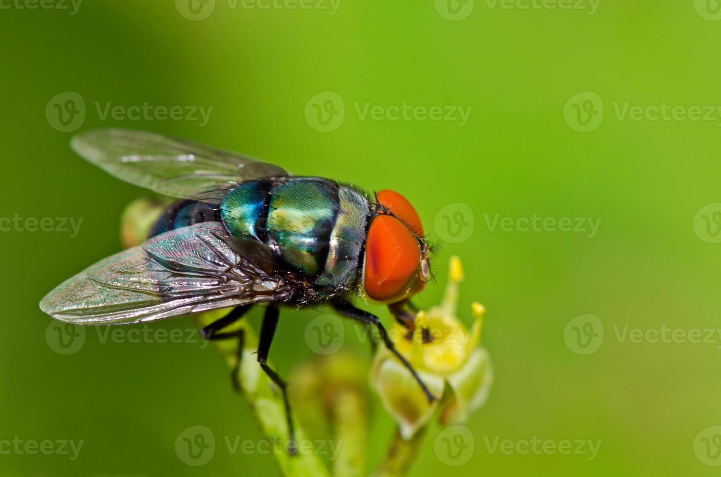 Garden Fly photo