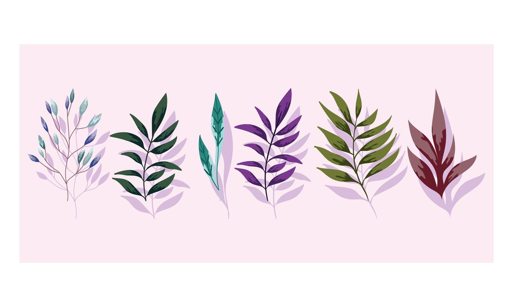 ramas de follaje. flora vegetación naturaleza diseño vector
