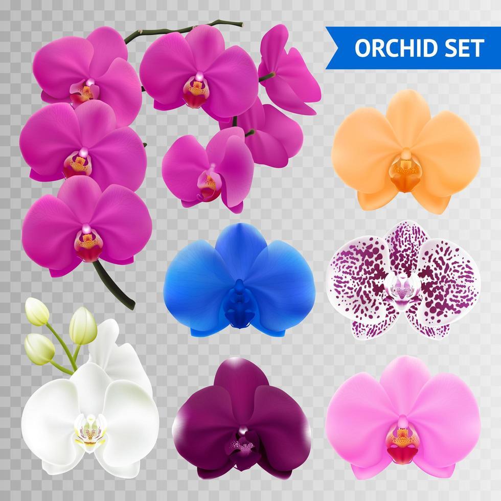 conjunto transparente de orquídeas vector