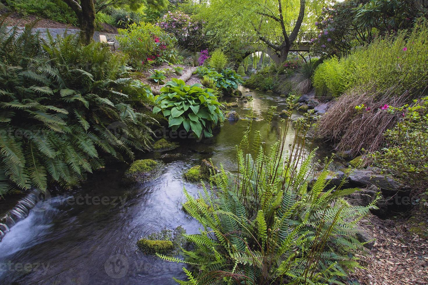 Stream at Crystal Springs Rhododendron Garden photo