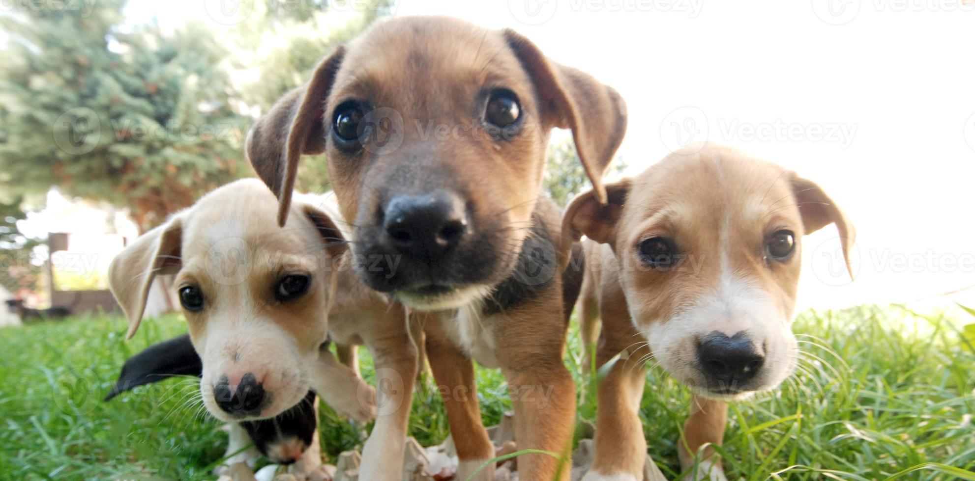 Three dog morning photo