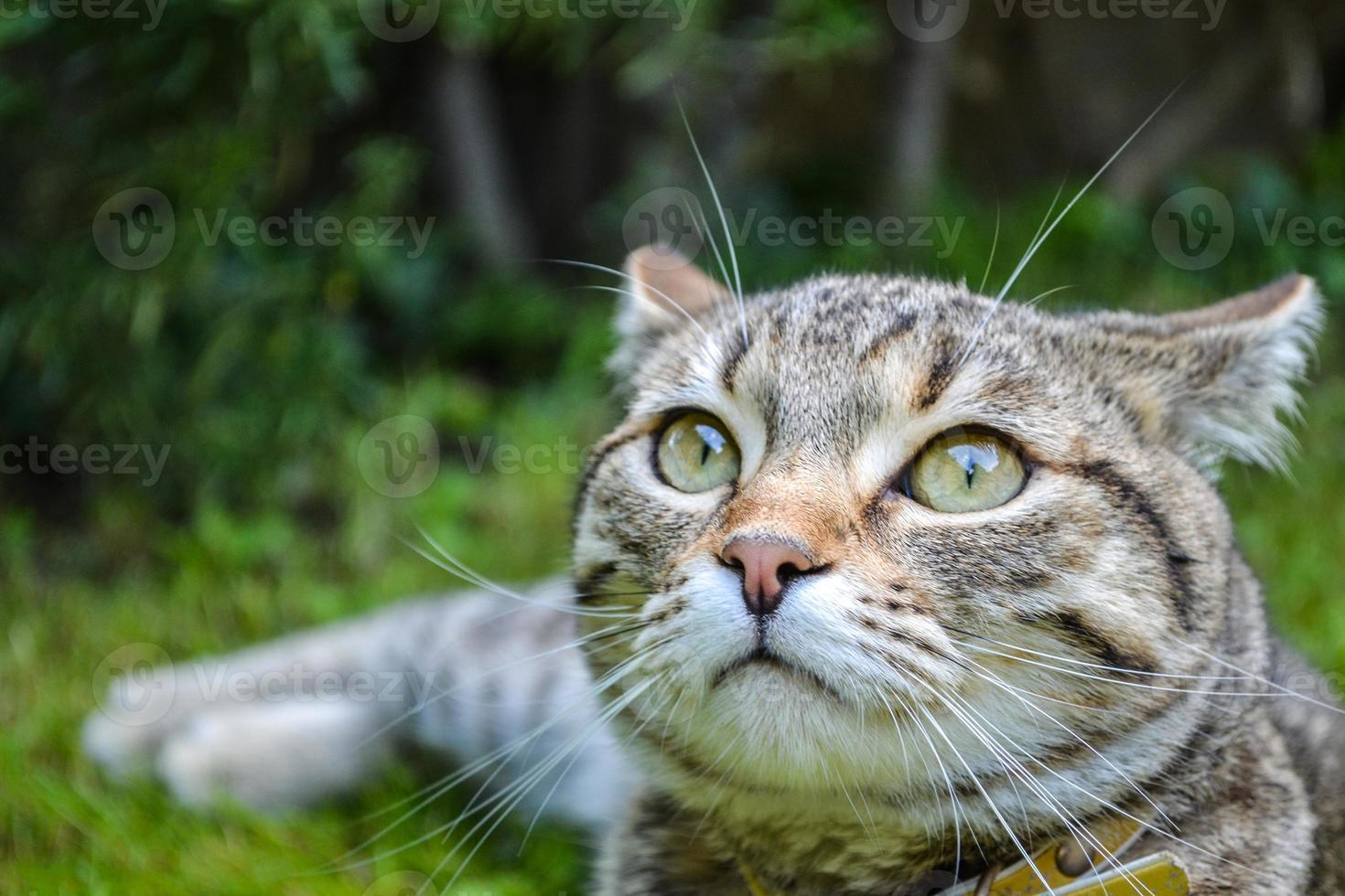 Beautiful tabby kitty in the garden photo