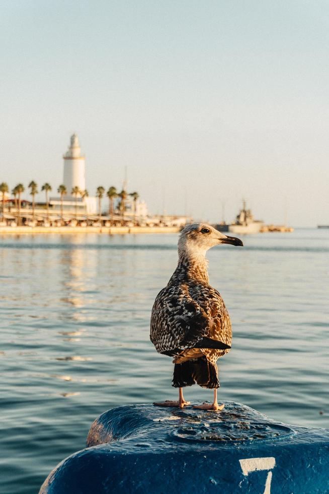 Seagull near the ocean photo