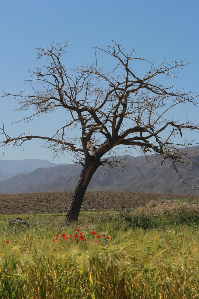 A lonely tree in open plains photo