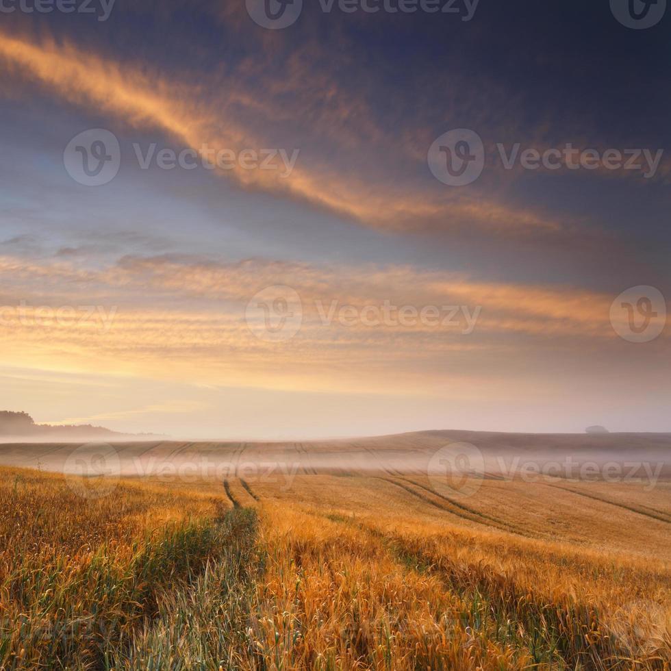Sunrise fields Colorful photo