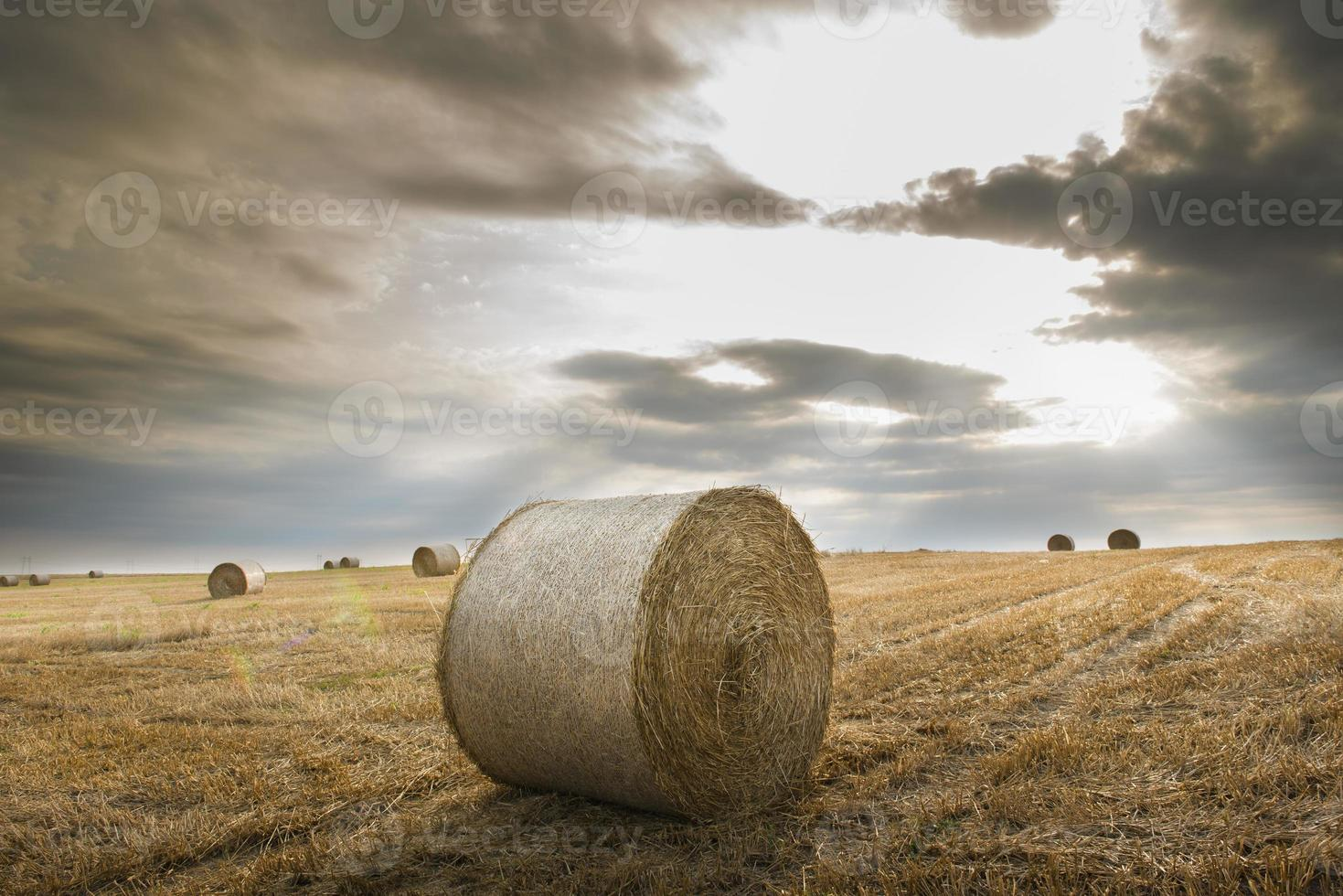 field with straw bales photo