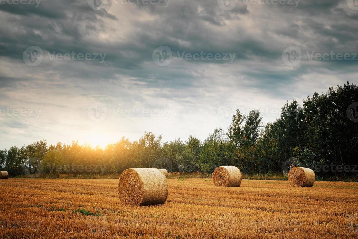 Bales on a field photo