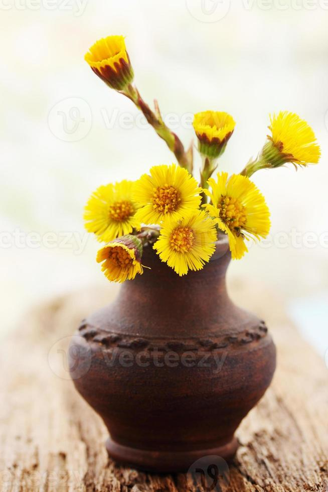 coltsfoot in the vase photo