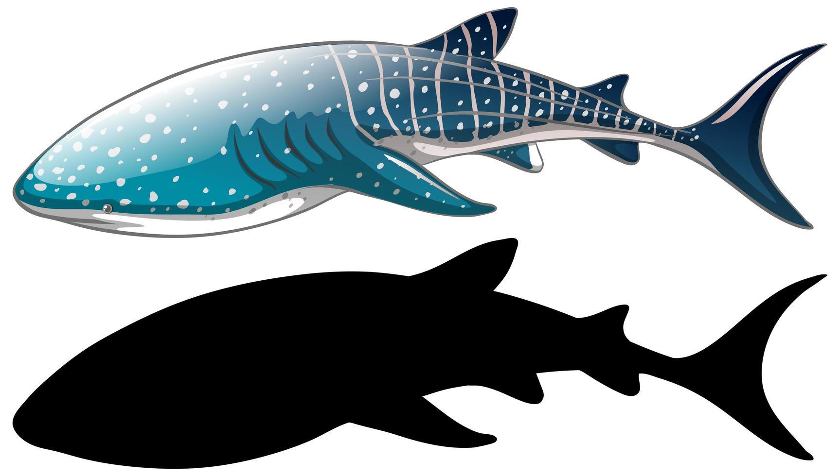 Personajes de tiburón ballena y su silueta sobre fondo blanco. vector