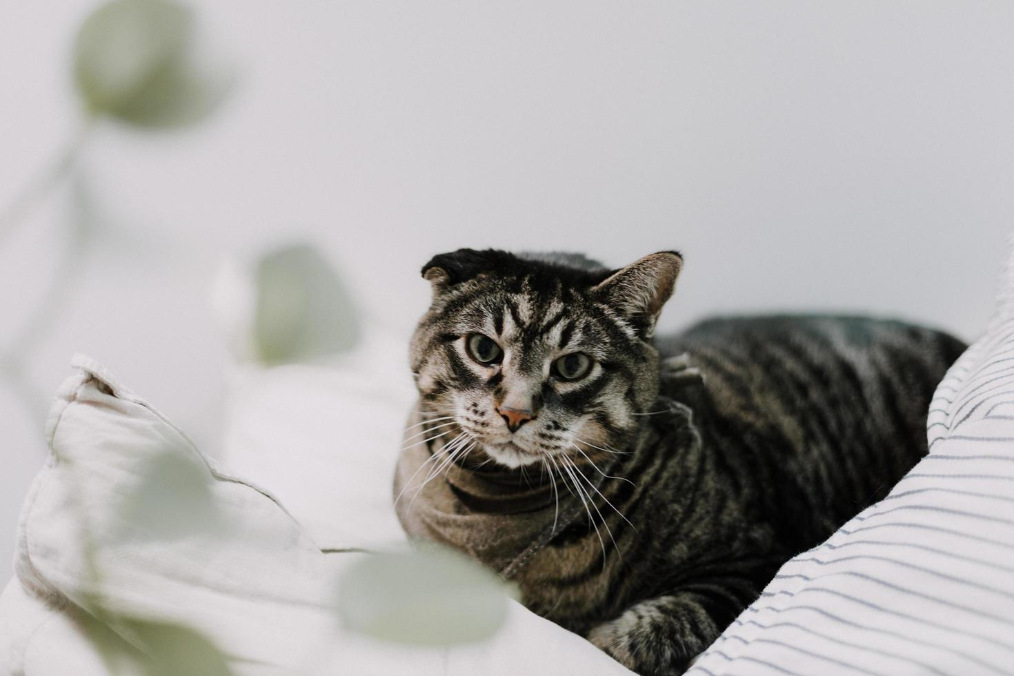 Brown tabby cat on bedding photo