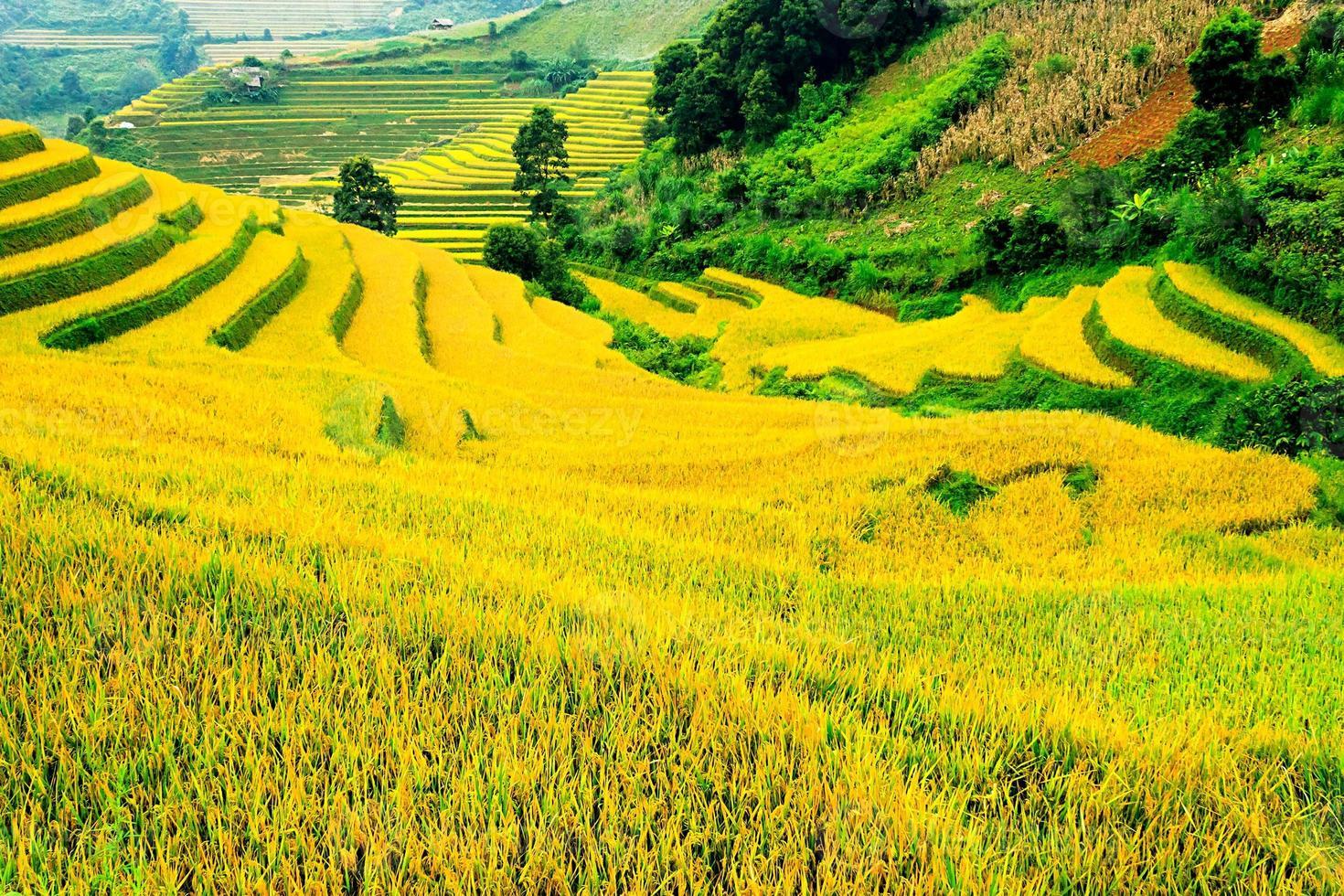 Rice fields on terraced of Mu Cang Chai photo
