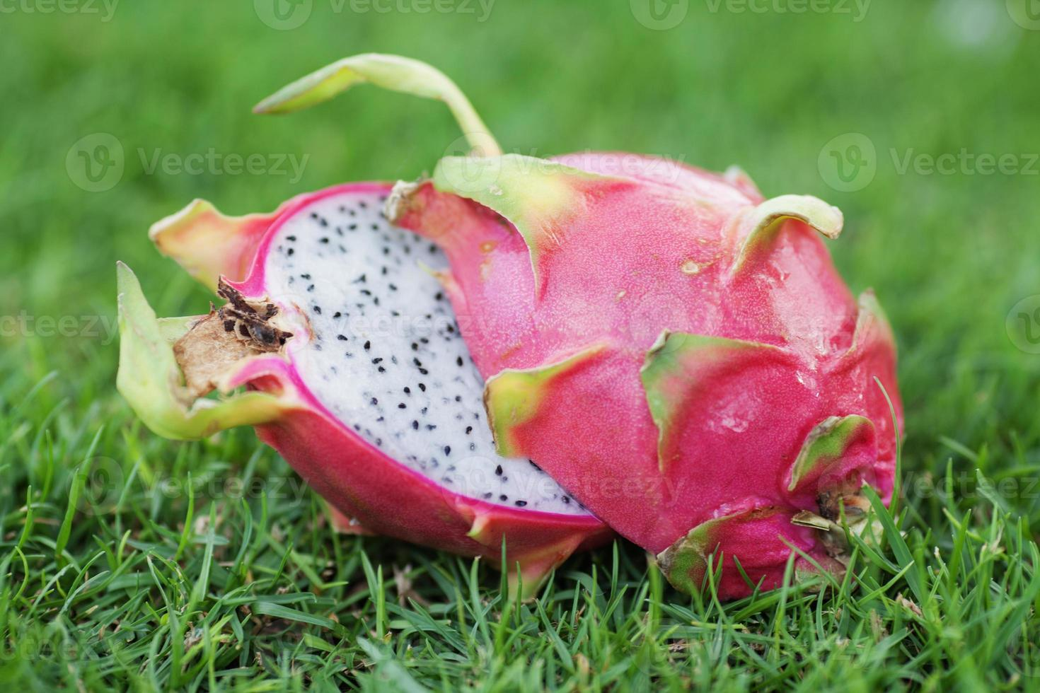 Dragon fruit photo