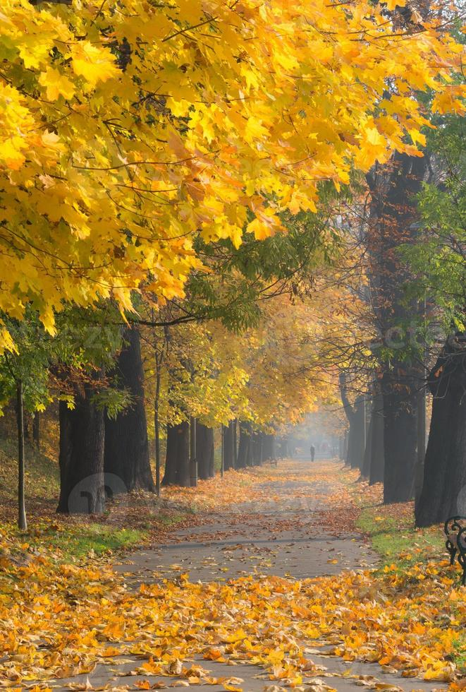 Callejón de árboles coloridos en el parque de otoño, Cracovia, Polonia foto
