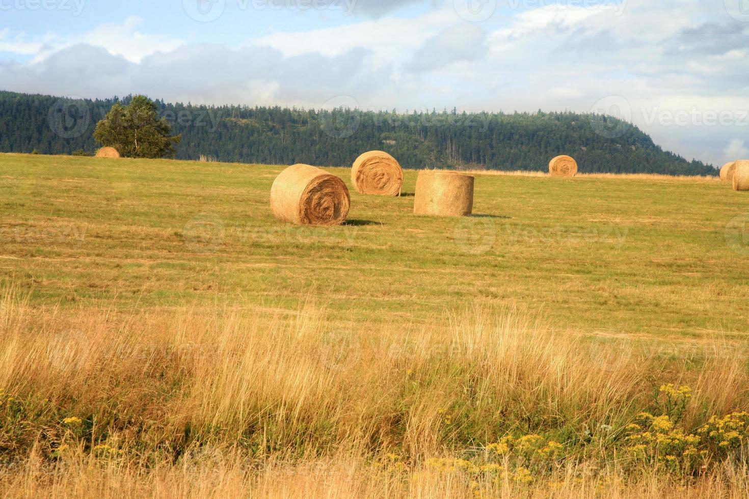 Hay harvest on meadow photo