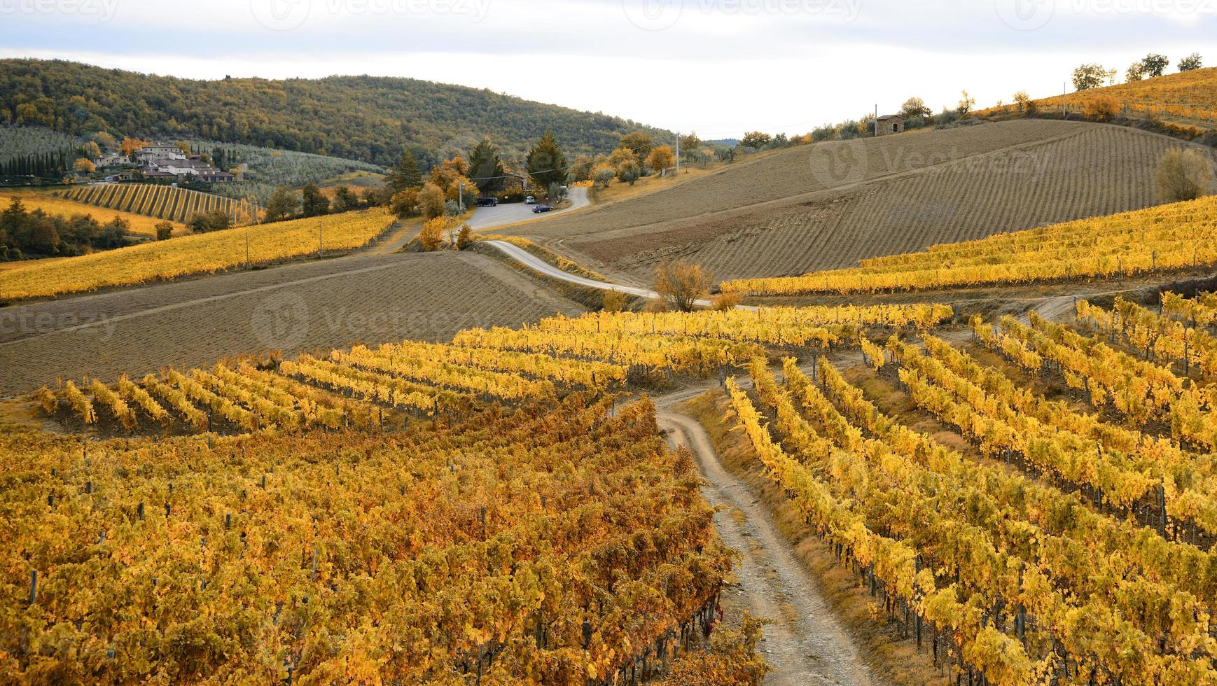 Autumn foliage in Italy photo
