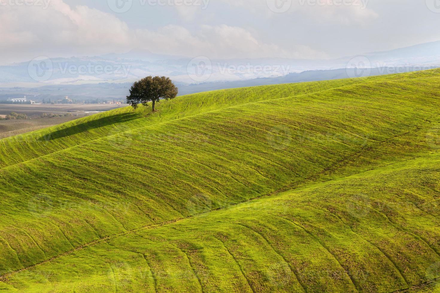 Velvet of Toscana photo