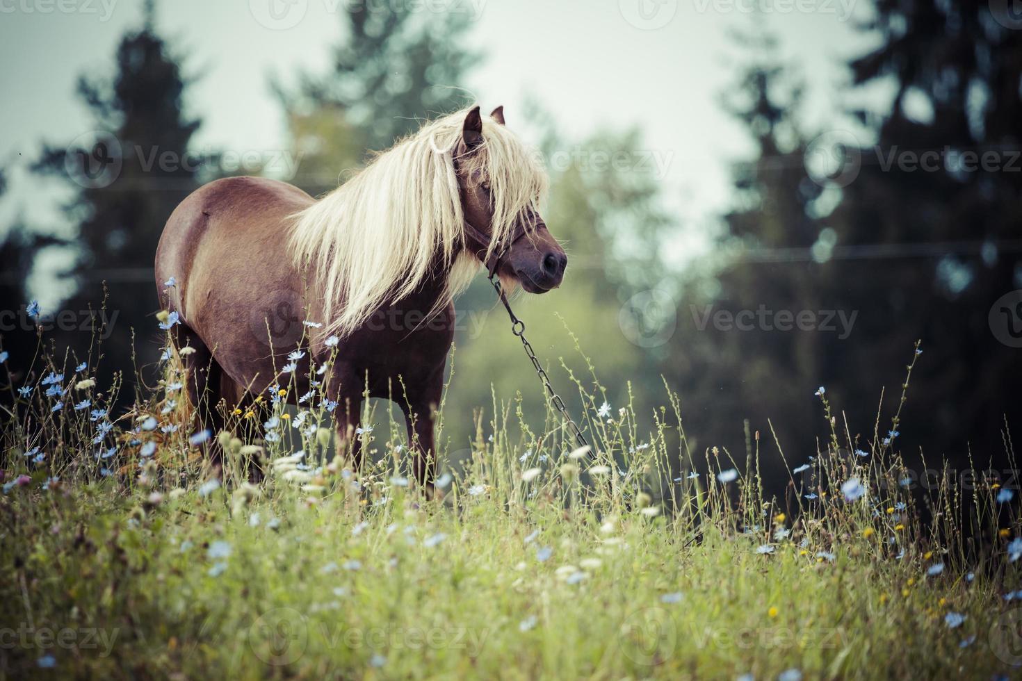 caballo, suwalszczyzna, polonia foto