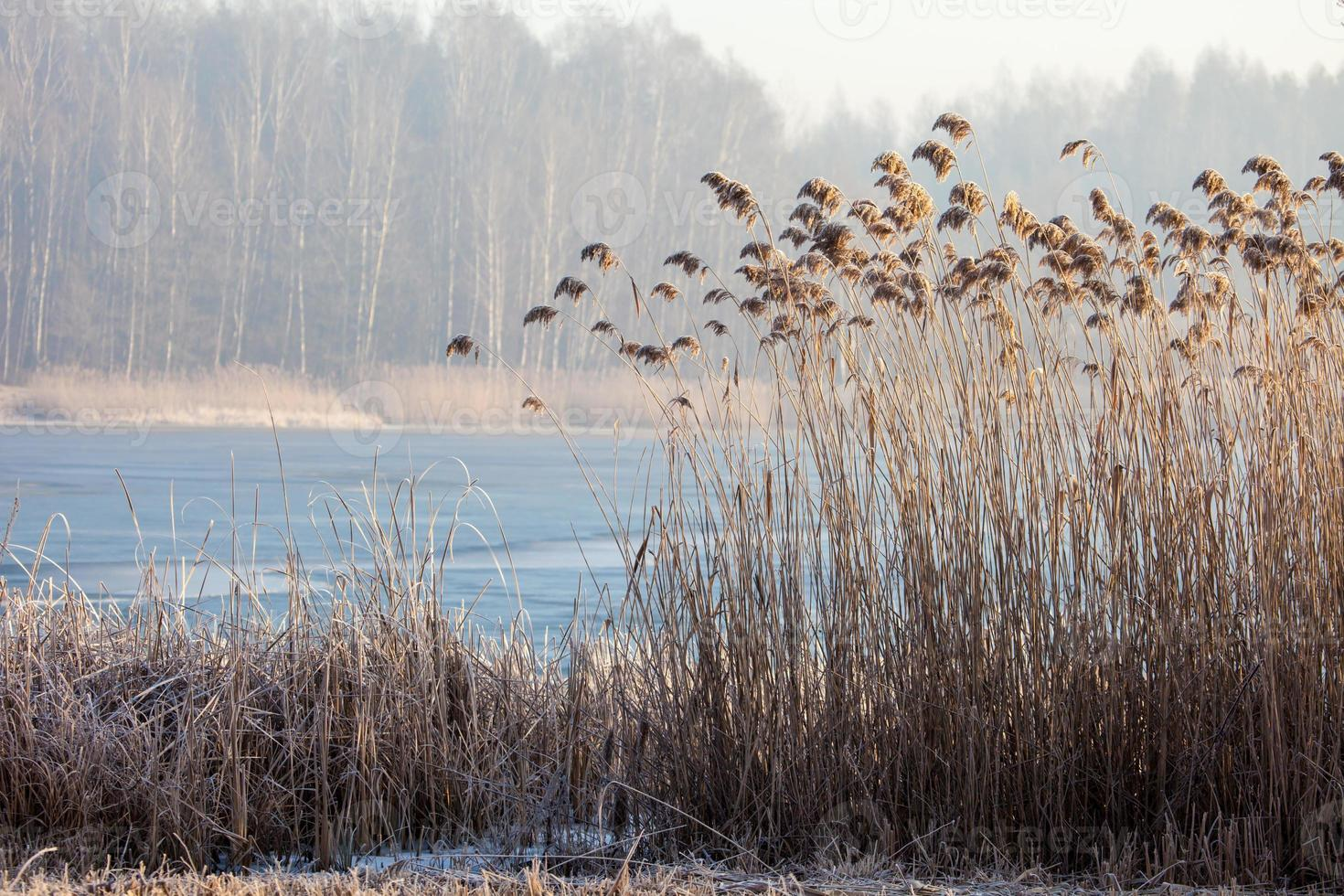 Lake Pogoria. Winter time landscape in Poland photo