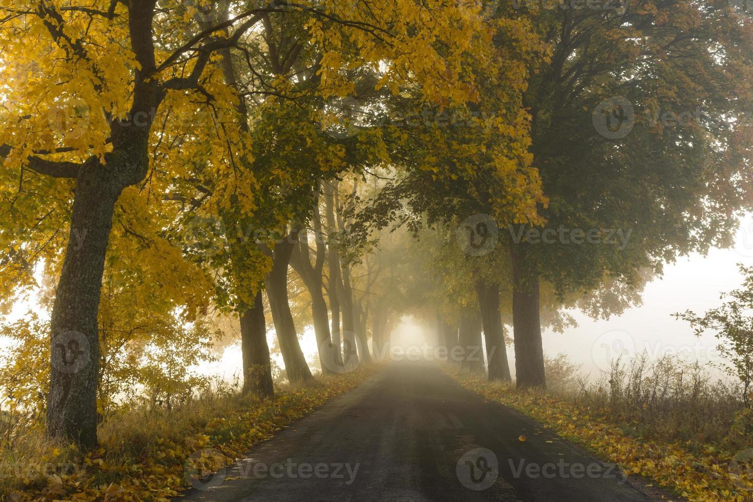 Misty Road photo