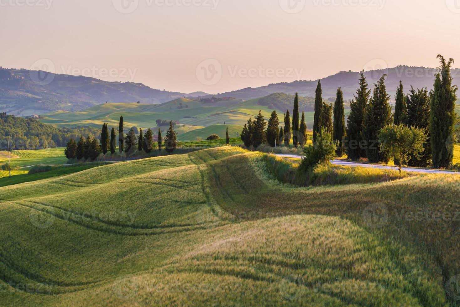 Quiet summer field in Tuscany photo