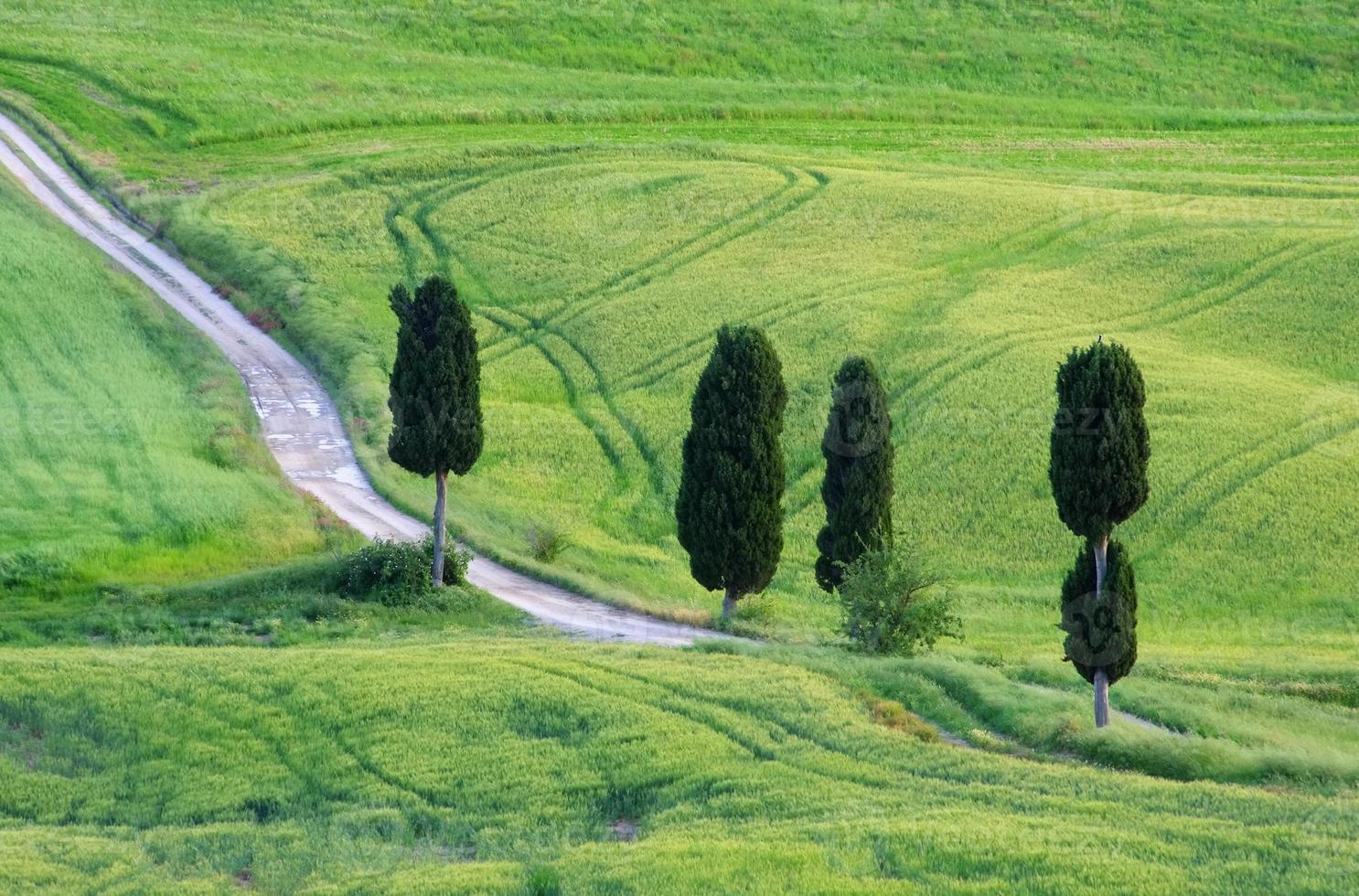 Tuscany cypress trees with track photo