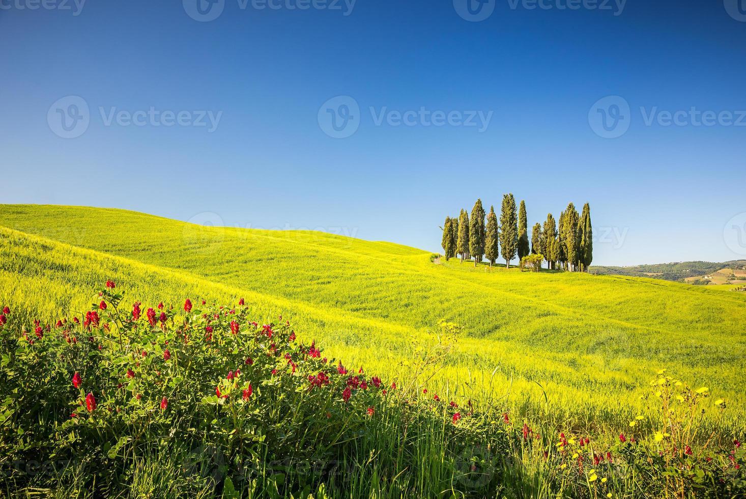 Toscana na primavera foto
