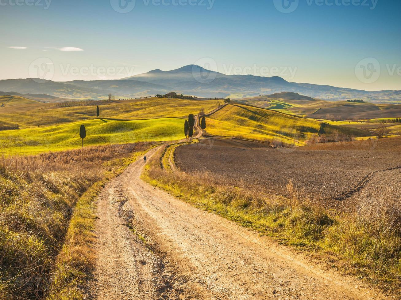 Cypress trees on the road in the Tuscan landscape photo